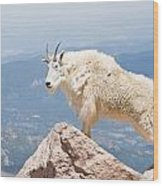 Mountain Goat Up High Wood Print