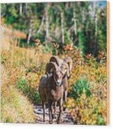 Mountain Goats Wood Print