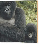Mountain Gorilla Mother And Baby Wood Print