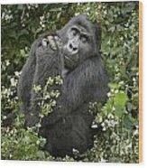 Mountain Gorilla Praying Wood Print