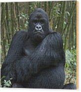 Mountain Gorilla Silverback Wood Print
