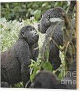 Mountain Gorillas Wood Print