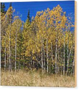 Mountain Grasses Autumn Aspens In Deep Blue Sky Wood Print