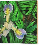 Mountain Iris And Ferns Wood Print