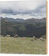 Mountain Landscape With Bighorn Sheep Wood Print
