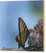 Mountain Larual Butterfly Wood Print