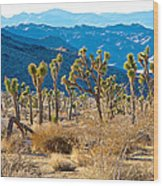 Mountain Layer Landscape From Quail Springs In Joshua Tree Np-ca- Wood Print