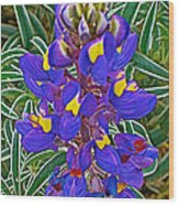Mountain Lupine In Ancient Incan Pisac In Andes Mountains Above Sacred Valley-peru   Wood Print