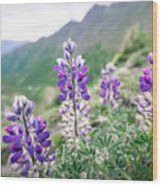 Mountain Lupine Wood Print