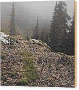 Mountain Meadow Wood Print