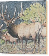 Mountain Monarch Wood Print