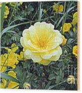 Mountain Rose Wood Print