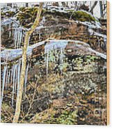 Mountain Spring Beauty  Wood Print
