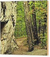 Mountain Trail Wood Print