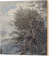 Mountainous Landscape With Beech Trees Wood Print
