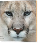 Mountian Lion Wood Print