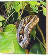 Mournful Owl Butterfly Wings Wood Print