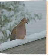 Mourning Dove After The Snowfall Wood Print
