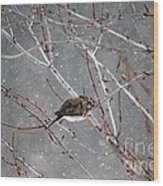 Mourning Dove Asleep In Snowfall Wood Print