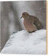 Mourning Dove In Snow Wood Print
