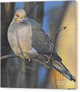 Mourning Dove On Limb Wood Print