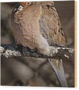 Mourning Dove Pictures 32 Wood Print
