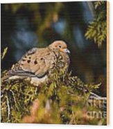 Mourning Dove Pictures 64 Wood Print