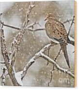 Mourning Dove Pictures 68 Wood Print