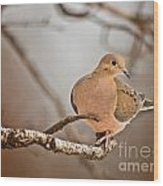 Mourning Dove Pictures 71 Wood Print