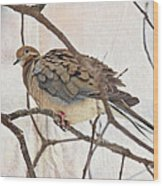 Mourning Dove - Sing No Sad Song For Me #2 Wood Print