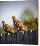 Mourning Doves On Fence Wood Print