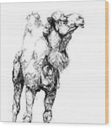Mr Camel To You Wood Print
