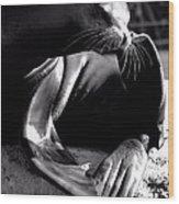 Mr. Flipper Whisker Itch Wood Print by John Grace