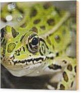 Mr. Froggy Wood Print