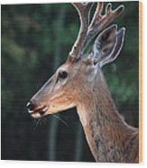 Mr. Majestic Wood Print
