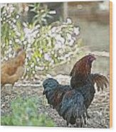 Mr. Rooster Struts Wood Print by Artist and Photographer Laura Wrede