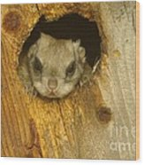 Mr Squirrel Answers The Door  Wood Print
