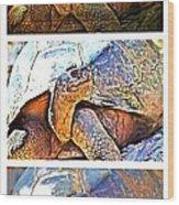 Mr. Tortoise Vertical Triptych Wood Print