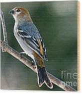 Mrs. Pine Grosbeak Wood Print