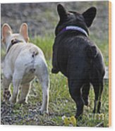 Ms. Quiggly And Buddy French Bulldogs Wood Print