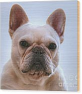 French Bulldog Seriously Wood Print