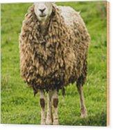 Mt Angel Abbey Sheep - Oregon Wood Print