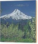 1m5125-mt. Hood In Spring Wood Print