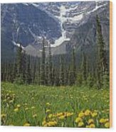 1m3613-mt. Patterson And The Snowbird Glacier Wood Print