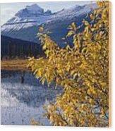 1m3626-mt. Saskatchewan In Fall Wood Print