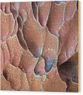 Muav Mosaic Wood Print