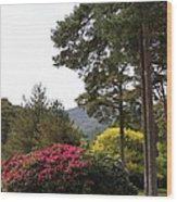 Muckross Garden In Spring Wood Print