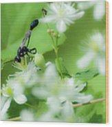 Mud Dauber In The Flowers Wood Print