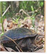 Mud Turtle Wood Print