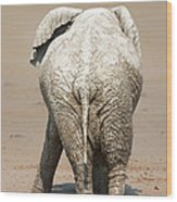 Muddy Elephant With Funny Stance  Wood Print
